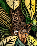 Jungle of the Night by Laurie J. Edwards