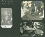 At the Top of Tinker Mountain (1945-1948)